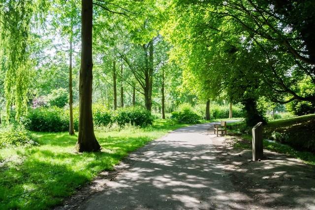 木々の茂る公園.jpg