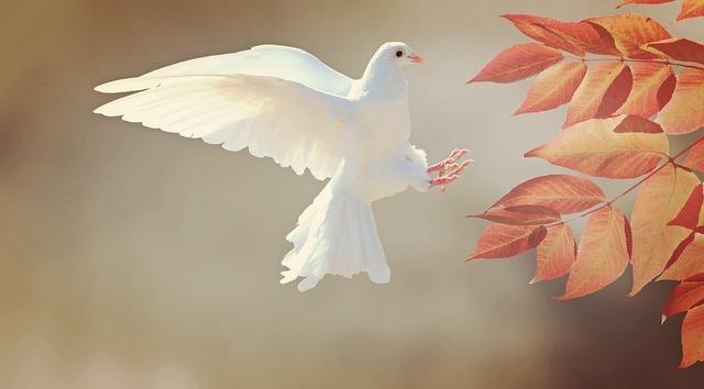 dove-2516641_960_720.jpg